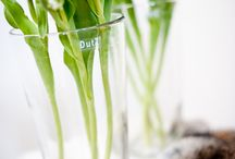 Clear vases / Mouthblown DutZ Collection vases