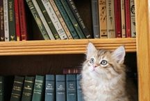 Bookish Beasts / Humans aren't the only ones who like a good book. Take a look at these animals, big and small checking, out their next favorite read.