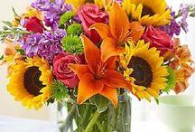 Meadows Seasonal/Holiday Flowers