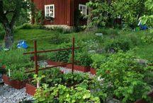 unelma puutarha
