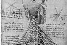 da vnci - anatomia