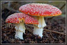 Mushrooms-Paddestoelen / by Annemarie