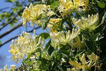 Kennedy plants