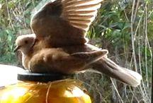 Let's Talk Birds Doves / Dove Pics - photos of beautiful Doves