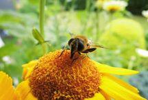 Insekten - Die kleinen, fleissigen Helfer im Garten