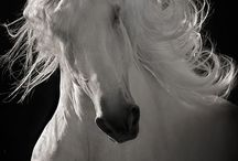 Horse's / by Leslie Fischer- Williams