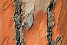 Bark and textures / by Kat