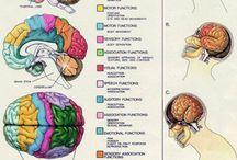 Brain / by Candice