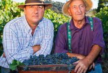 Wyjątkowe wina SCHATZ podajemy jako pierwsi w Polsce! / Naturalne, ekologiczne wina z hiszpańskiej Rondy http://www.pastaibasta.pl/promocje/997-wina-schatz-w-restauracji-pasta-i-basta