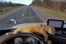 katter ♥
