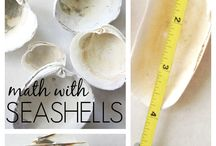 seashell