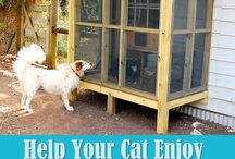 Catio Construction / Creating a catio for your cat to safely enjoy the outdoors. / by PawZaar