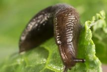SLUGS FY AND YOUR MOTHER