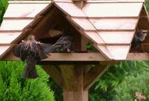 Fugl i hagen