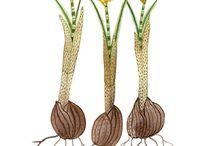 Tendance Feuilles/bulbes/plantes