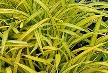 ciekawe rośliny