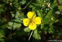 Elidas blomster
