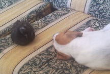 i miei cani
