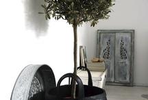 Växter / Olika växter att ha inomhus
