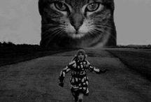 Surrealism & Minimalism