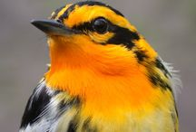 Birds / by Janet Trautman