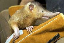 Rare, Amazing & Sometimes Fierce Animals
