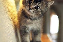 Cute Cats :3