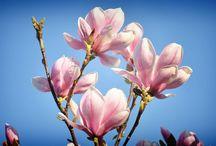kvety flowers