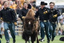 Ralphie / by Colorado Buffaloes