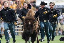 Ralphie / by Colorado Buffaloes