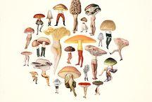 люди-грибы