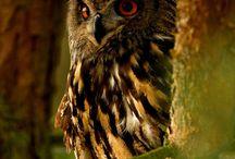 Owls / by Eryn Ward