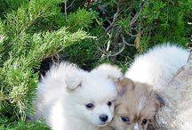 Vofs-dog-cute as a Button
