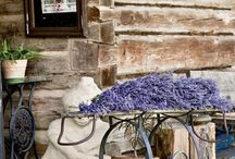 ♥ Lavender ♥