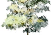 Trees/vegetation graphic
