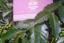 PT. Cahaya Mas Global Kopi / PT. Cahaya Mas Global Kopi adalah perusahaan yang menjual kopi luwak asli indonesia dalam berbagai produk kopi luwak dan melayani order seluruh Indonesia dan Luar Negeri.Kopi yang di produksi di PT. Cahaya Mas Global kopi,yaitu kopi dari gayo (Aceh) dan juga dari mandheling, provinsi sumatera utara.