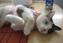 knitting clothes for cats / knitting patterns for cats
