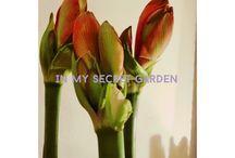 Photography Garden PHILOSOPHY