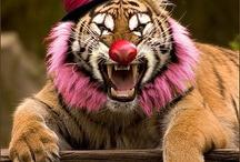 Animal clown