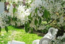 красивости в саду