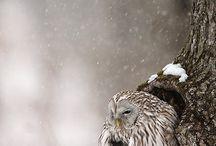 Animals / by Mustafa Ak