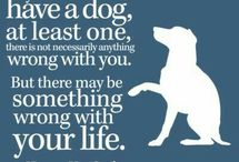 dog and pet quotes
