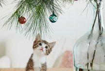 Chrisrmas and cats / Chats et Noël