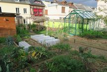biodiversité jardin