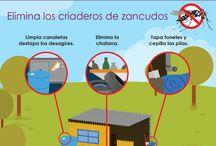 #CombateAedes / Evitemos que el zancudo que transmite el Zika, Dengue y Chikungunya se propague
