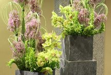 Flowers and garden ideas
