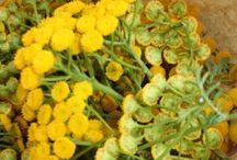 Préparations naturelles au jardin potager / Cultivons ces plantes pour élaborer des extraits fermentés, infusions, décoctions, macérations pour donner de la vigueur et une bonne santé à nos légumes.