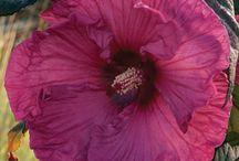 flower inspiration10 / by Dede Turner