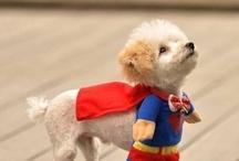 Superdoggy