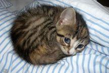 i <3 kitties / by Deneil Hotson
